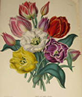The Illustrated Bouquet, Consisting of Figures with Description of New Flowers - Edward George y Andrew Henderson